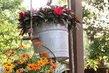 Gardening / Gardening inspiration #gardening / by Lisa Safford