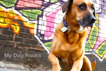 My Dog Rocks / I love dogs....just can't get enough!