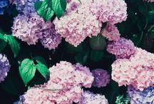 Flora / Flowers & florals.