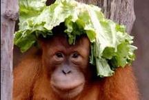 Be an Orangutan / by Joan