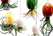 Gardening / Indoor/outdoor plants & vegetable garden ideas.