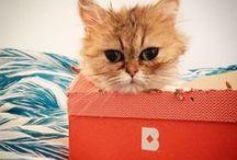 Birchbox #Birchboxes / Comparte la foto de tu cajita con el hashtag #Birchboxes