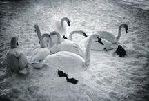 Winter Ice XMas