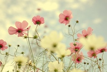 Efflorescence / by Anyface .