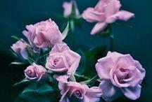 ROSES & Flowers / by RΣCΔI IΠΣL