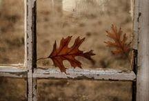 Autumn / All things Autumn!