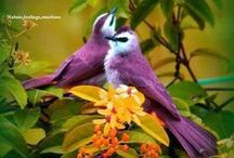 birds / I love to watch/look at birds for they are a reminder to me how much God loves me. Matthew 6:26 Look at the birds of the air. / by Janice Johns