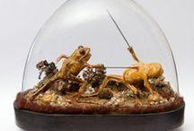 art under glass / by Agnes Strauss