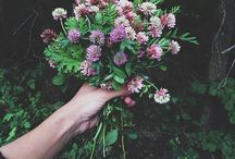 love for flowers