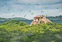 Belize: The Jungle is calling me back.