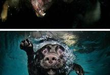 Animals, I love animals! / by Whitney Child