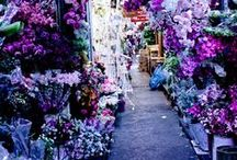 You're Turning Violet, Violet! / Shades of violet that inspire our bikini color palette.