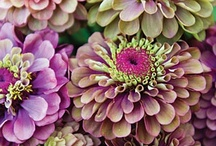 Pretty Posies  / Gardener's green thumb