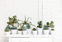 Plantes ❤  Plants