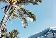 So Many Palms, So Little Time / Palm tree inspo shots from around the globe.