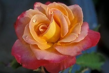 Wishes for my garden / by Denise Balinski