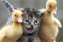 Birds, Bunnies & Animal Love