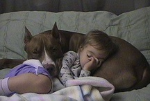"""Pit Bull love! / Did you know Pit Bulls used to be called the """"Nanny dog"""" because of their faithfulness to their owners children? These dogs are nothing but innocent animals being discriminated against because of stupid people out there who fight them (i.e. Micheal Vick).  Did you also know they rank #2 on the temperament chart, next to the lab?  / by Melody Armstrong"""
