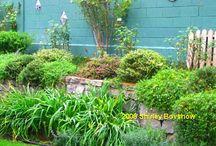 Garden creations  / by Kristen Baligian