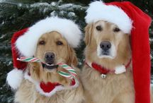 Christmas critters / by Donna Hyland