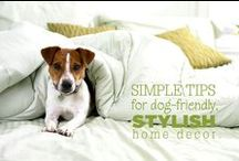 For the Canines in Our Lives / Recipes, crafts and products made for dogs.