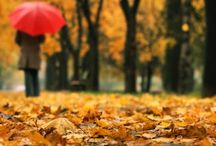 Falling for fall(: / by Trista Holder