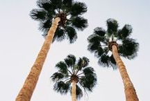 Palm Tree Porn / Because palm trees = happiness.