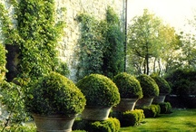I'm In the Garden / Grand, Old World Estate, Formal Gardens with Clipped Boxwood, Topiaries, Statuary and Urns
