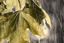 April Showers / you can stand under my umbrella, Ella