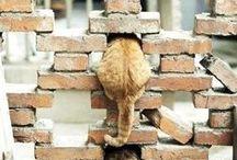 CATS / by Aynsley Eggen