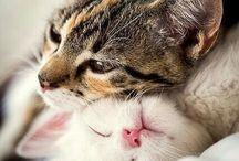 m e o w / i love cats
