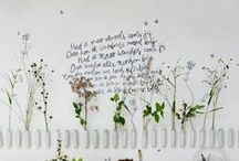 Garden / by Aynsley Eggen