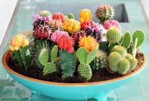 Desert Garden / I have a thing for desert gardens. Succulents and cactus are just about the only plants I can't kill!