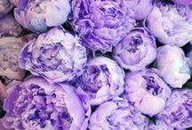 Hues: lilac & lavender / flowers ,,, anything !