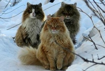 =^..^=  cats  =^..^= / by Moina