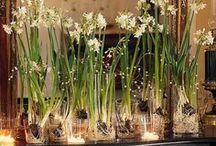 d e c o r: flora / Floral arrangements