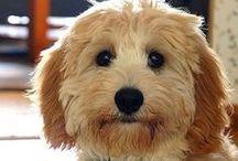Pups / by ℒ i n d l y
