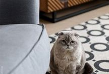 Pets in Interior | Животные в интерьере