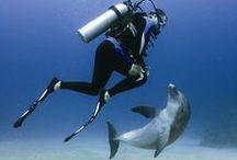 Scuba Diving / Scuba Diving Gear and Destinations