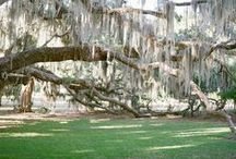 The Golden Isles | THE SOUTHERN C(ity) GUIDE