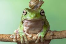 Animals: Amphibians / Pictures of frogs and such