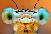 """Animals: Insects and Arachnids...all """"bugs"""" / Insects"""