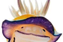 Animals: Sea Slugs / Friendly Neighborhood Sea Slugs