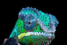 Animals: Reptiles / Reptiles