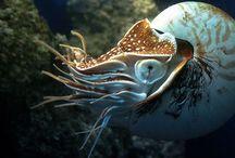 Animals: Underwater Invertebrates / Cephalopods, Mollusks, Crustaceans, etc.