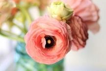 Flowers - Love them! / by Kyra Duffy