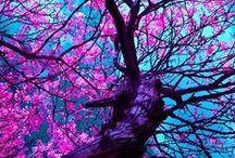 Beautiful / by Lyn