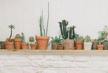 plant up my life / Je huis komt pas echt tot leven met planten. Deel jouw passie voor planten. Pin mee en verzamel groen leven; plant up your life! Wil je meepinnen? Volg dan dit bord en ik voeg je toe.