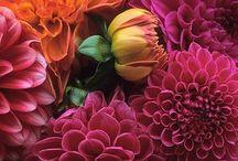Flowers, flowers, everywhere... / by Christine VanDeVelde