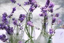 Things I can do with Lavender